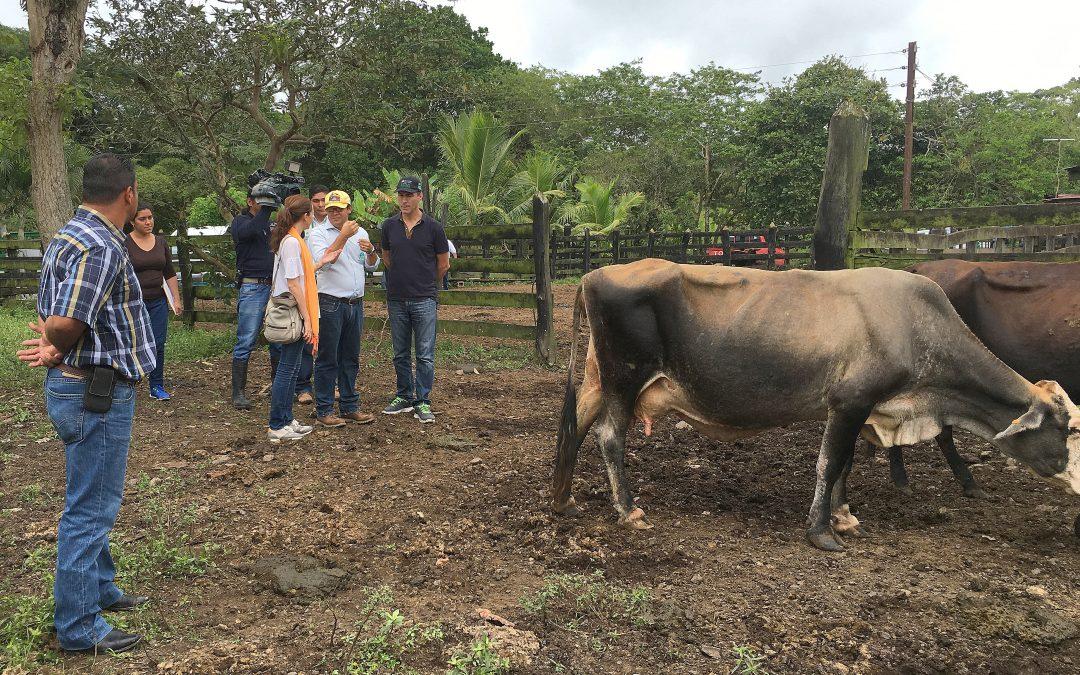9 mil pequeños ganaderos de Nicaragua se benefician de las cadenas de valor