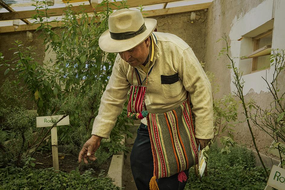 El Dr. Francisco Mamani en el vivero-laboratorio de plantas medicinales de Villa Esteban Arce. Reportaje Gráfico: Miguel Lizana, AECID.