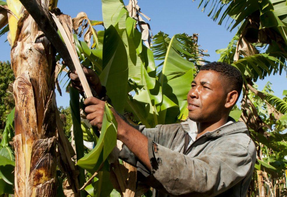 Agrocrédito contra la pobreza rural
