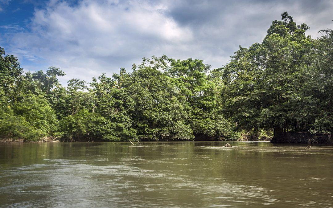 Colombia y Ecuador se unen para conservar ecosistemas compartidos