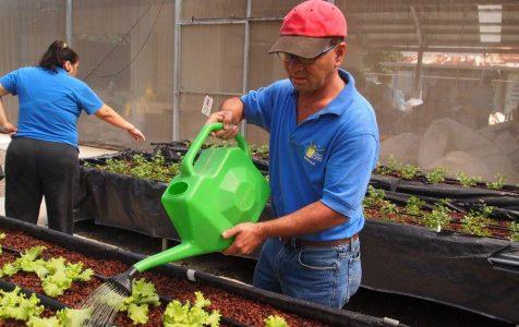 Señor regando plantas