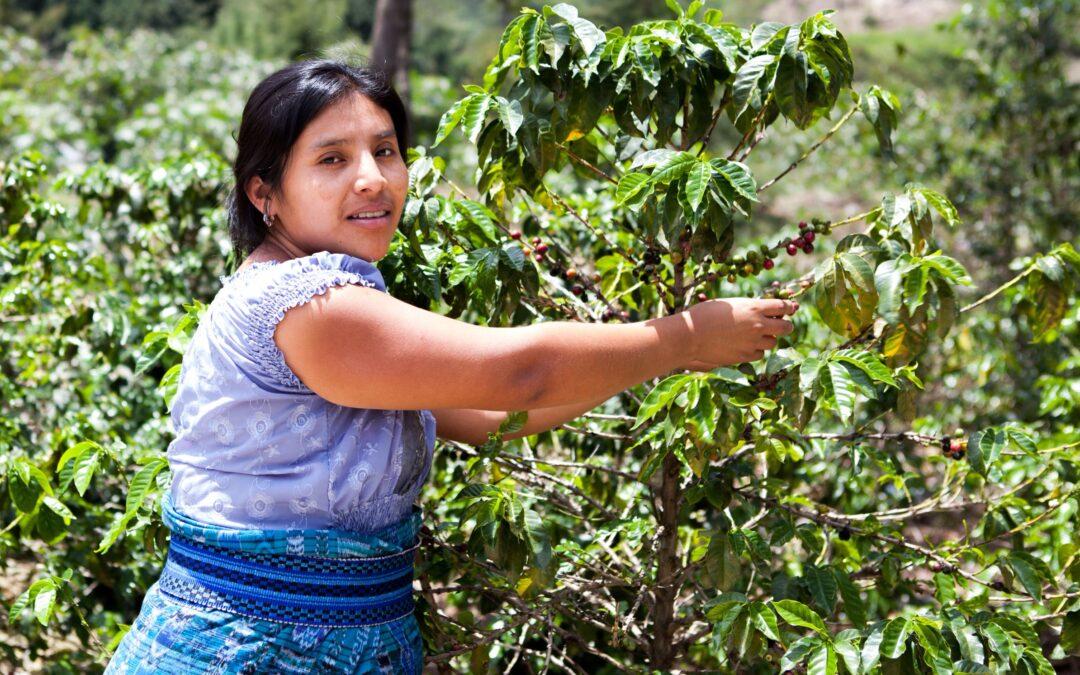 Mujeres rurales: rescatar su papel clave en la agricultura y eliminar desigualdades