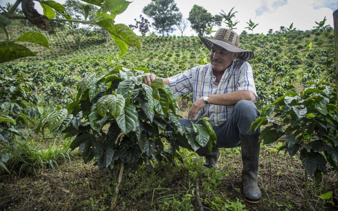 Transformando la crisis en respuesta y los desechos en fertilizante orgánico y energía limpia