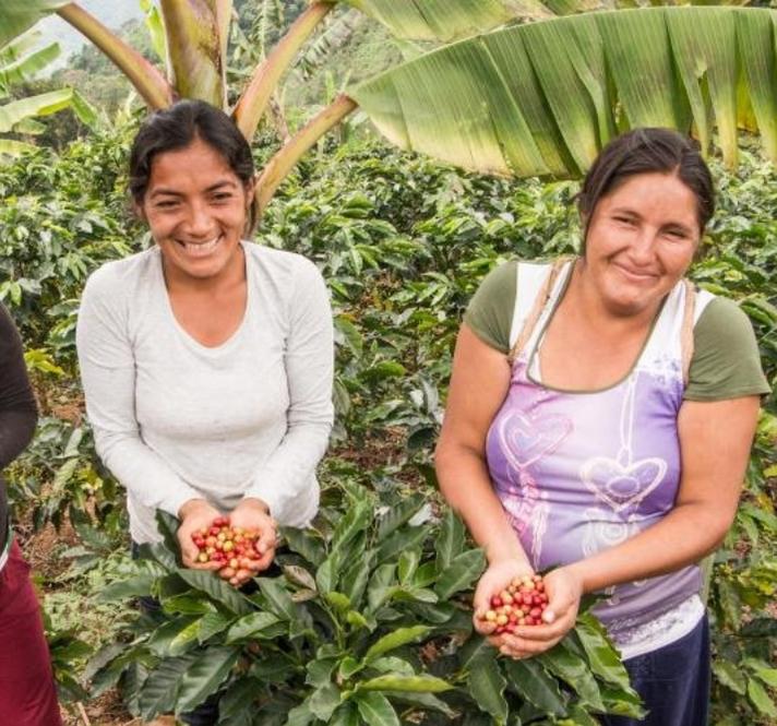 Café que siembra desarrollo sostenible